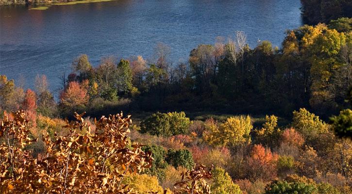 fall foliage surrounding water