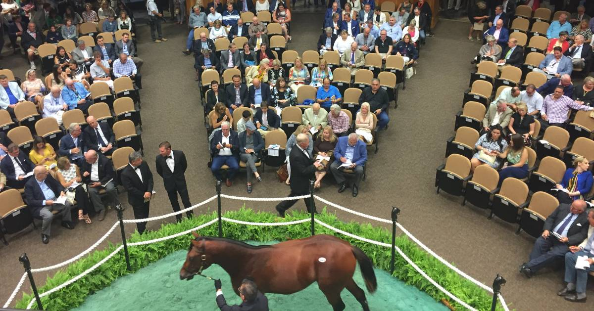 horse auction room