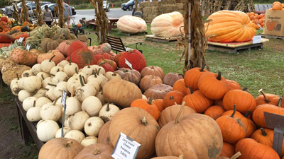assortment of pumpkins for sale at sunnyside gardens