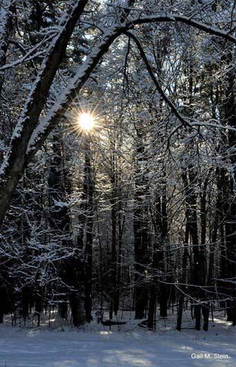 saratoga forest