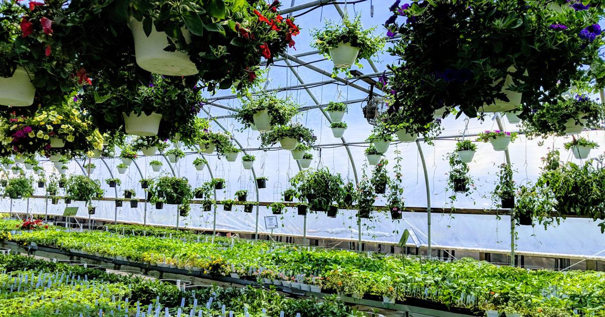 plants in a garden nursery