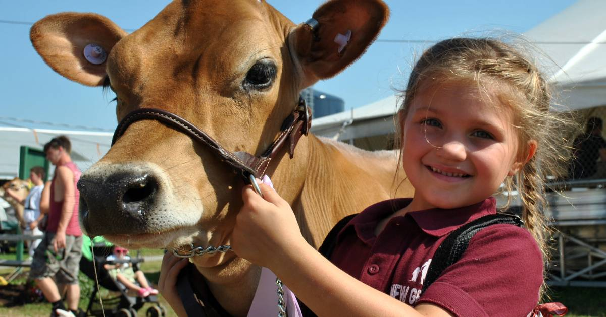 girl and a brown cow