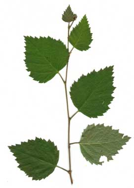 plant with grean leaves