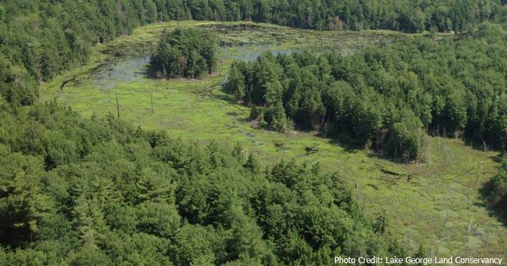 wetlands in the gull bay preserve