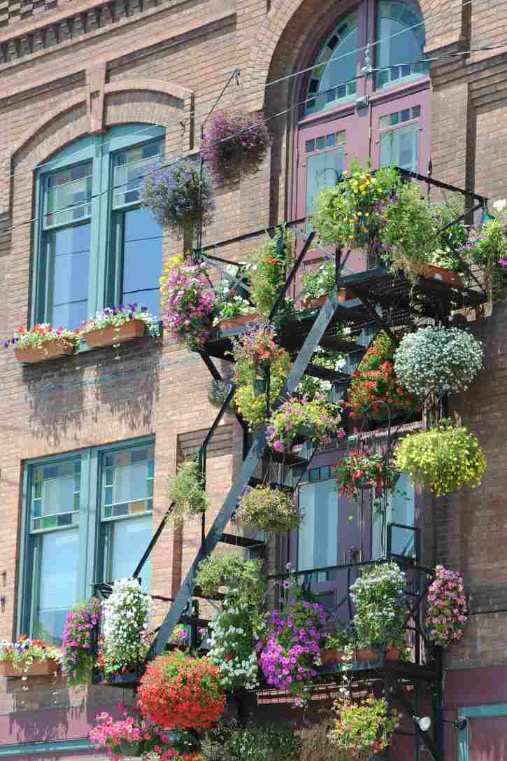 plants hanging on a fire escape in saratoga