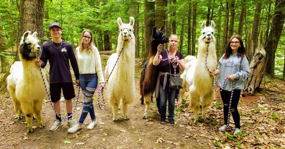 four people posing with llamas in the woods