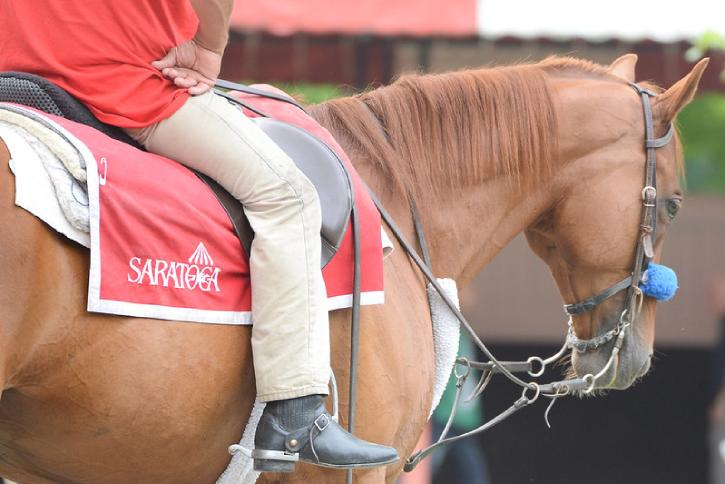 horse wearing a saddle blanket with saratoga logo