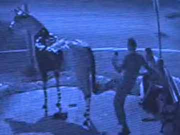 Saratoga Springs Horse Vandalism Caught On Video Tape