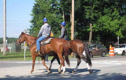 horses saratoga
