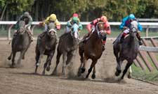 Saratoga Springs Horses