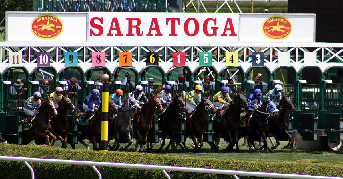 horses at the starting gate at the track