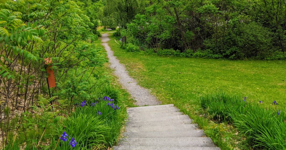 path in park by flowers