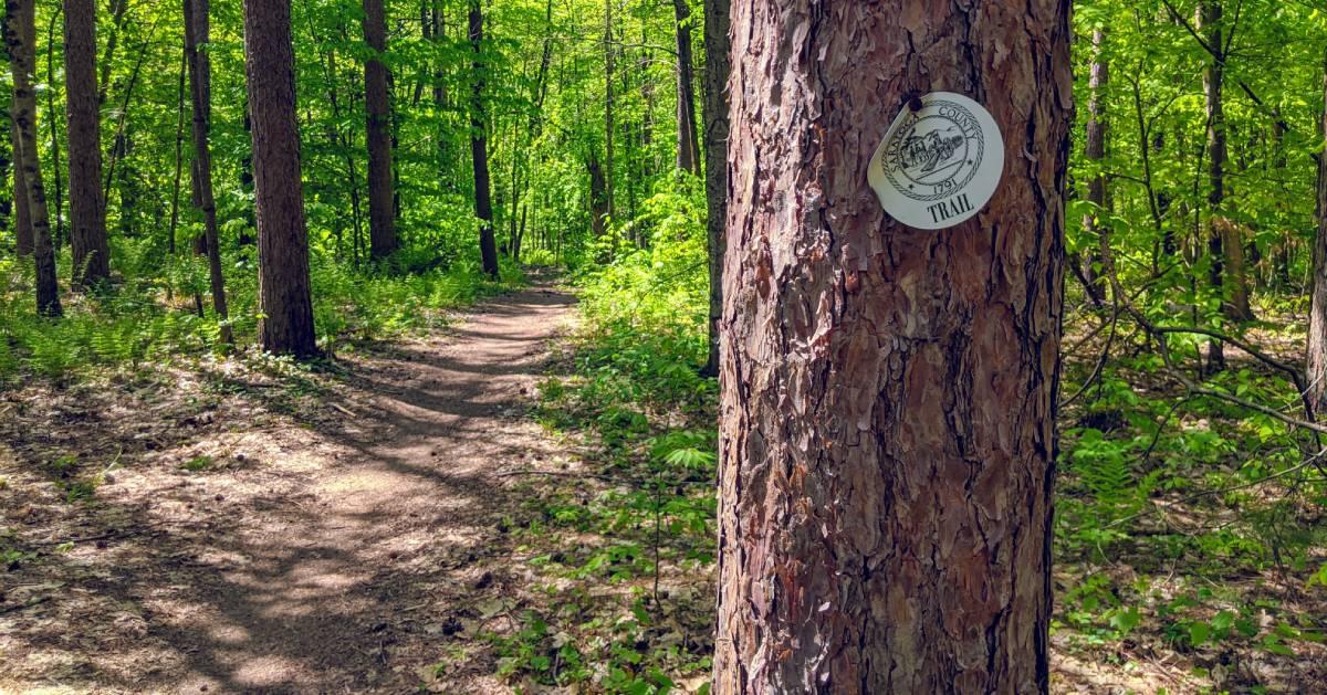 trail with trailmarker