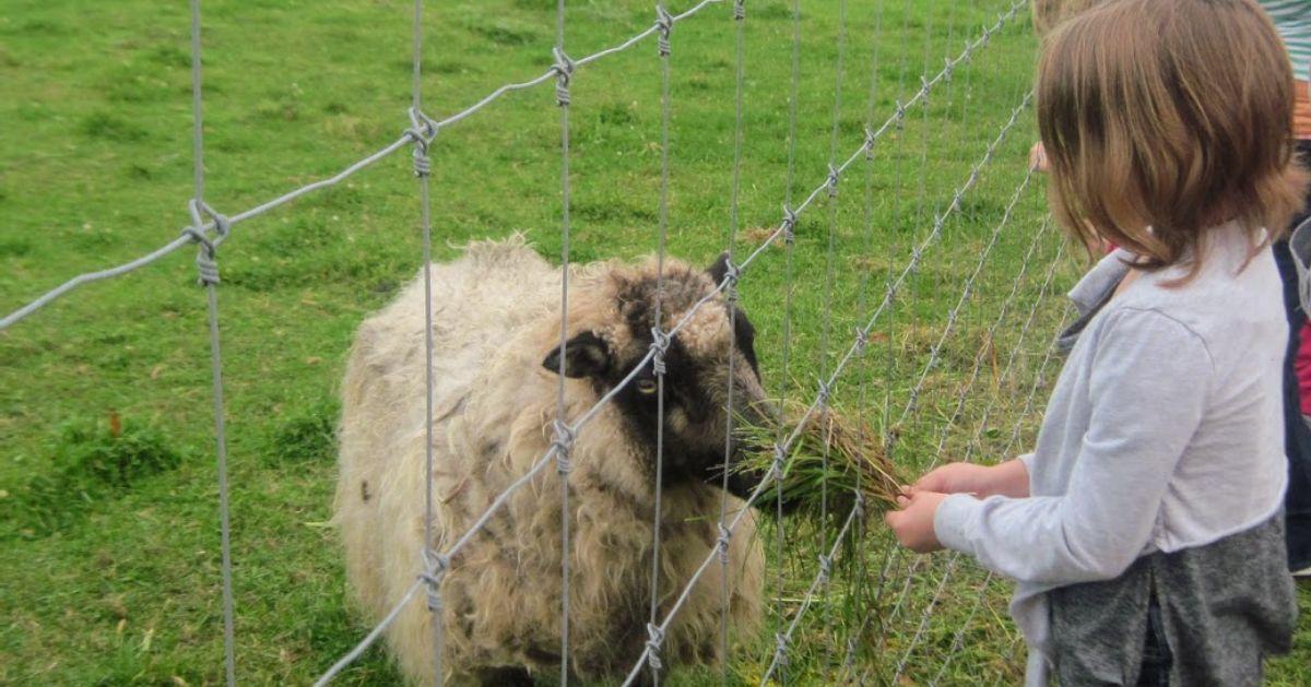 kid near a sheep