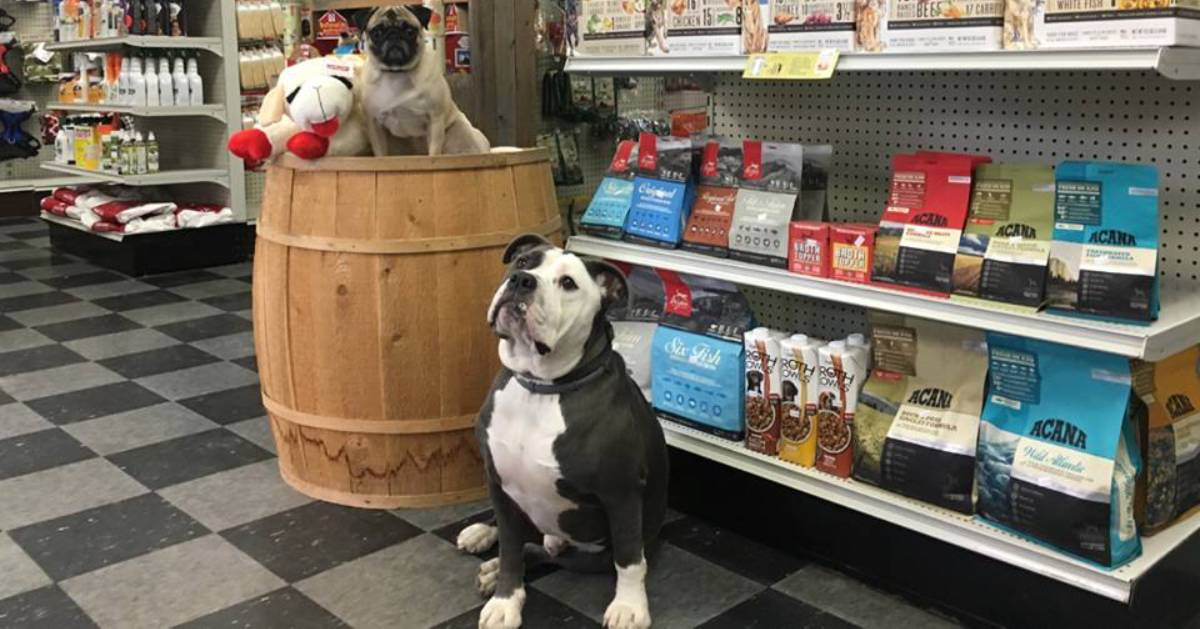 dogs near store shelves