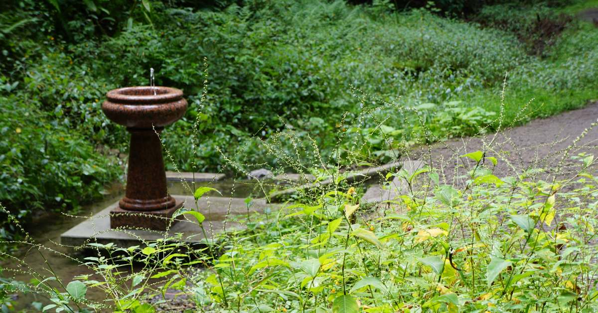 a mineral spring fountain in the woods