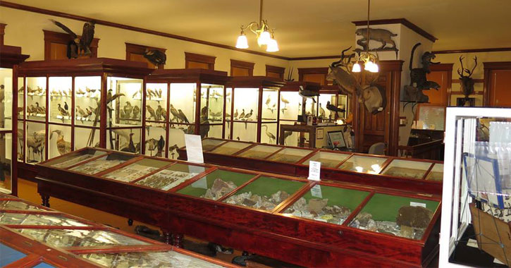 displays of birds and rocks in a museum