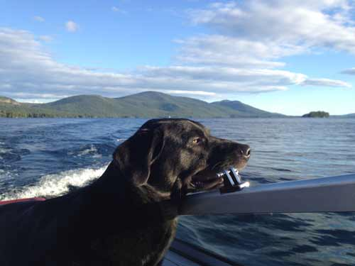 black dog in a boat on lake george