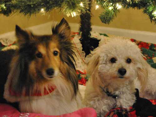 two dogs under a christmas tree