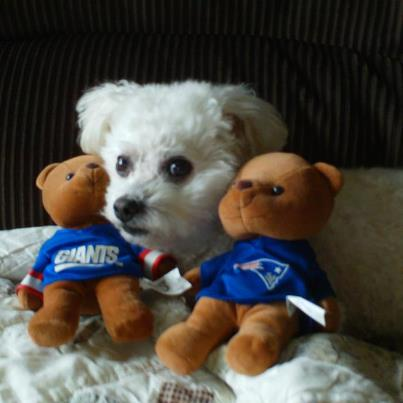 white dog with two stuffed bears