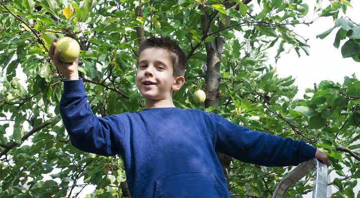 a boy in a tree smiling with a green apple in his hand