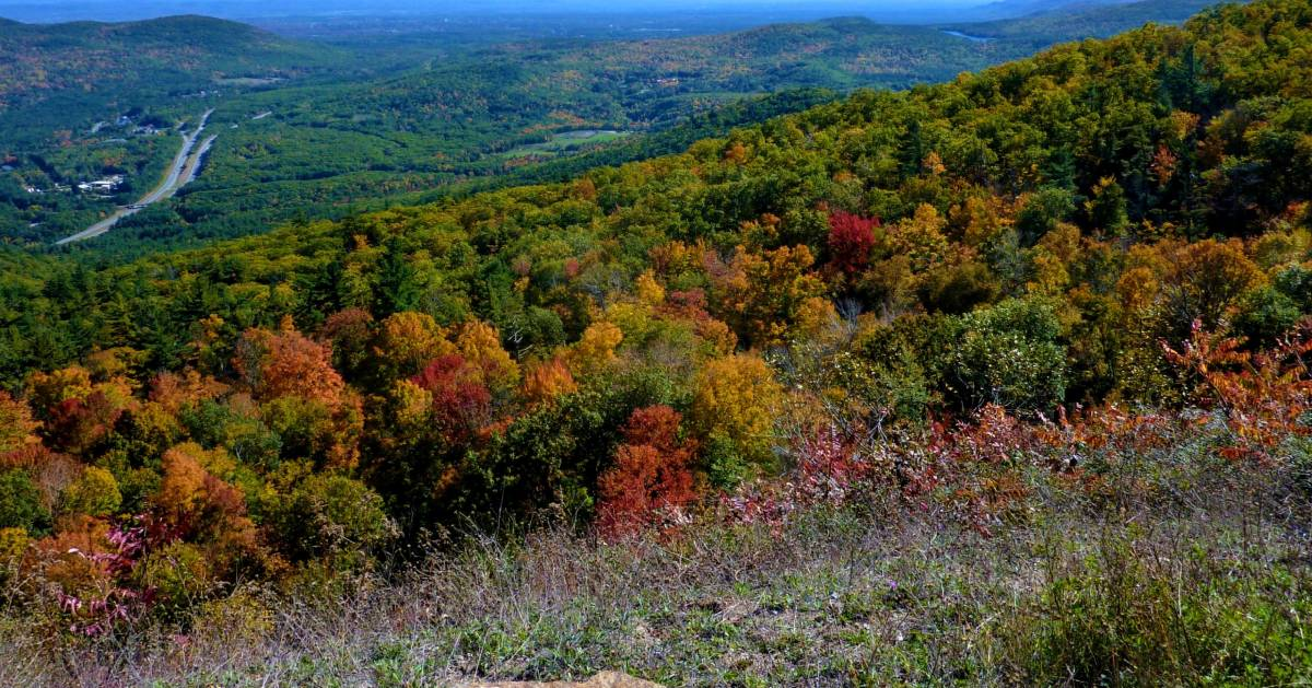mountain view and fall colors