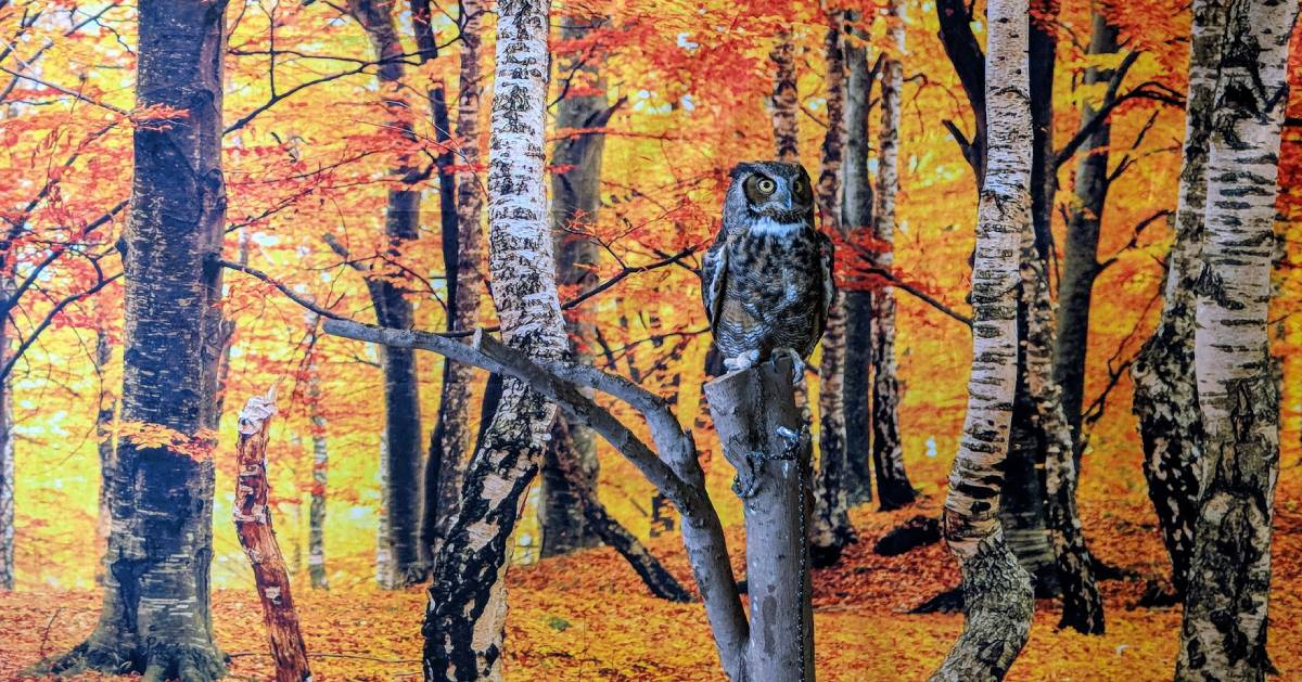 owl near tree backdrop