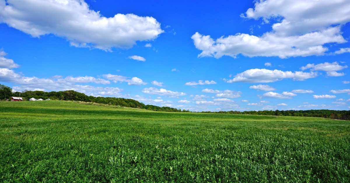 field at round lake preserve