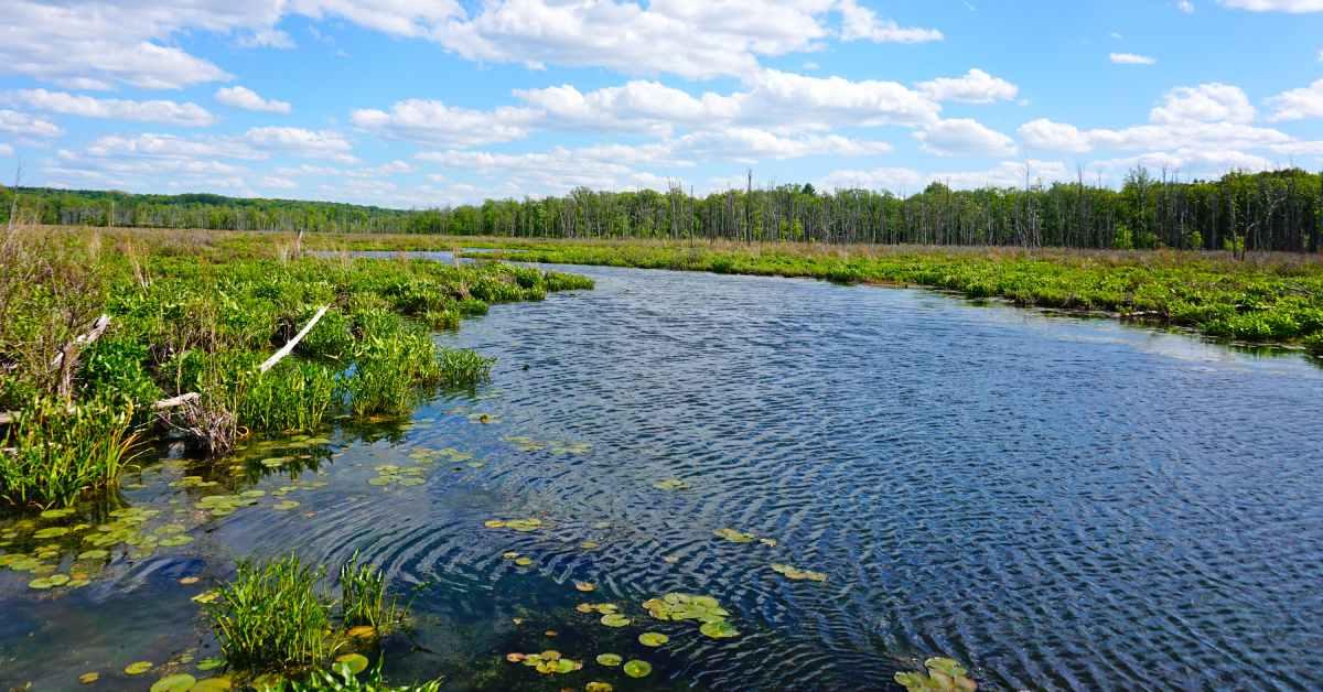 wetlands at round lake preserve