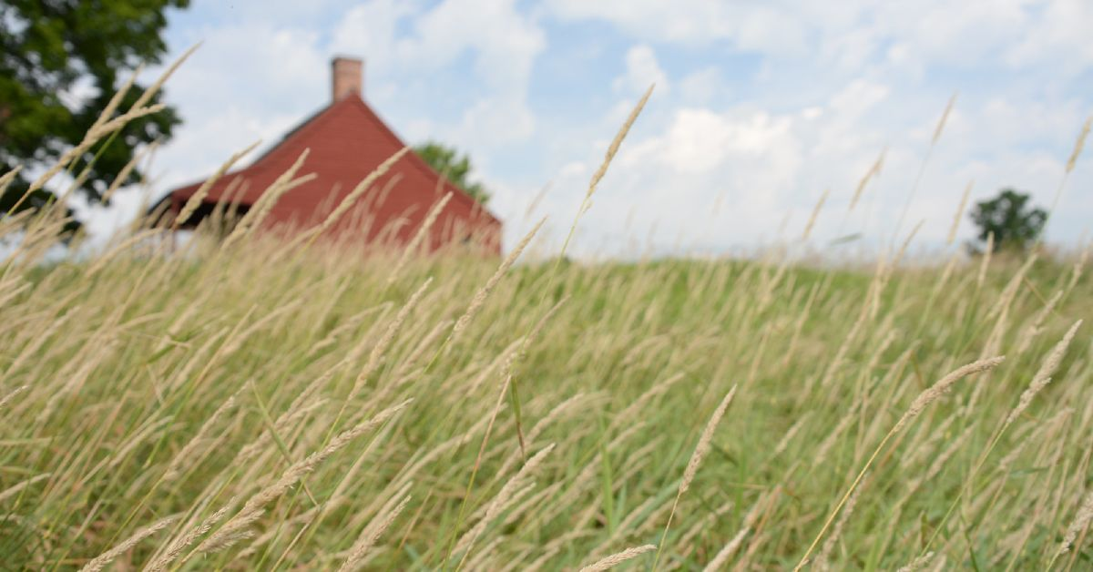 a field of tall grass at saratoga national historical park