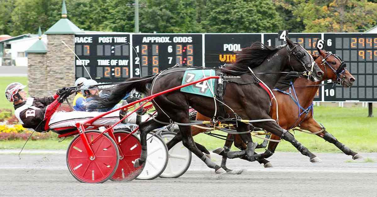 harness track horse racing