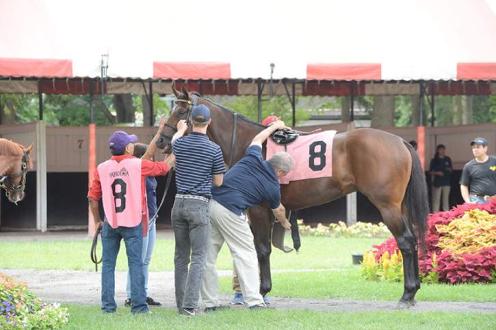 a horse being saddled for a race