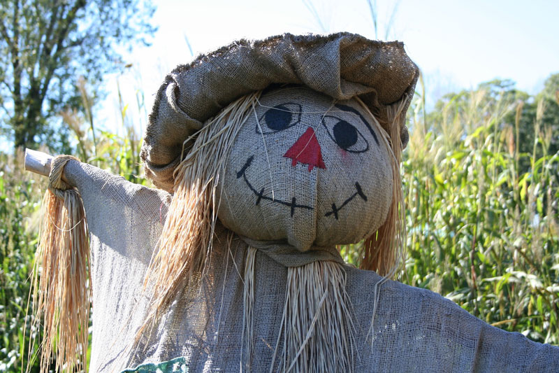 scarecrow in corn field