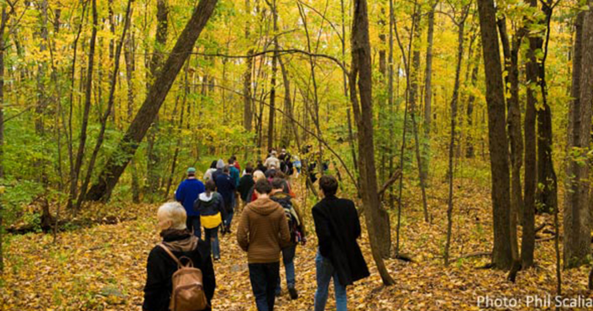 a group of people walking through the woods during fall foliage time