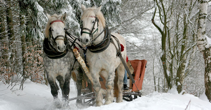 two white horses pulling a sleigh in the snow