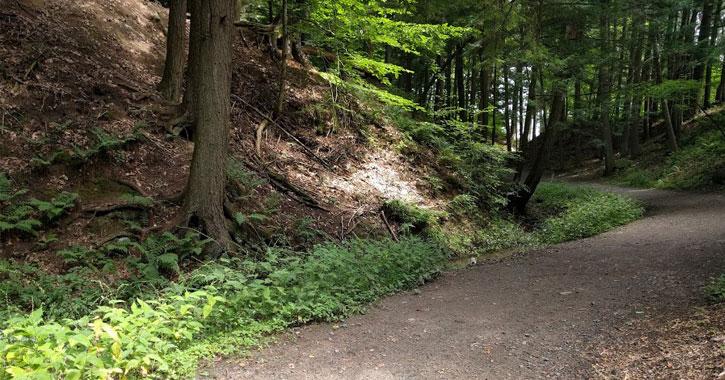 a walking path through Saratoga Spa State Park