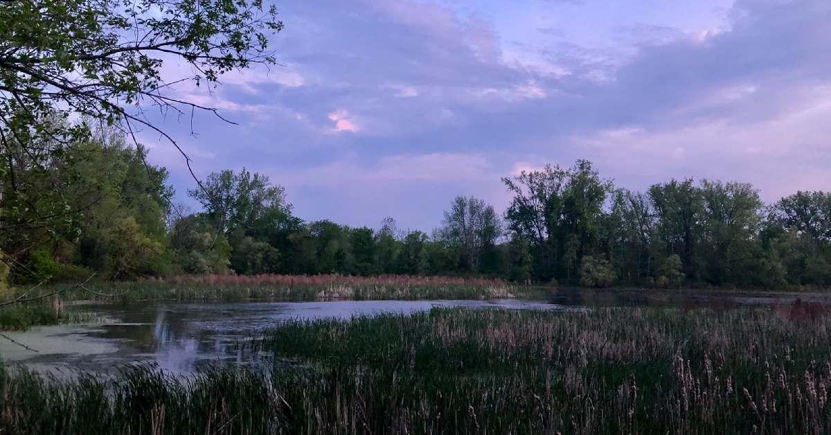 wetlands at vischer ferry preserve