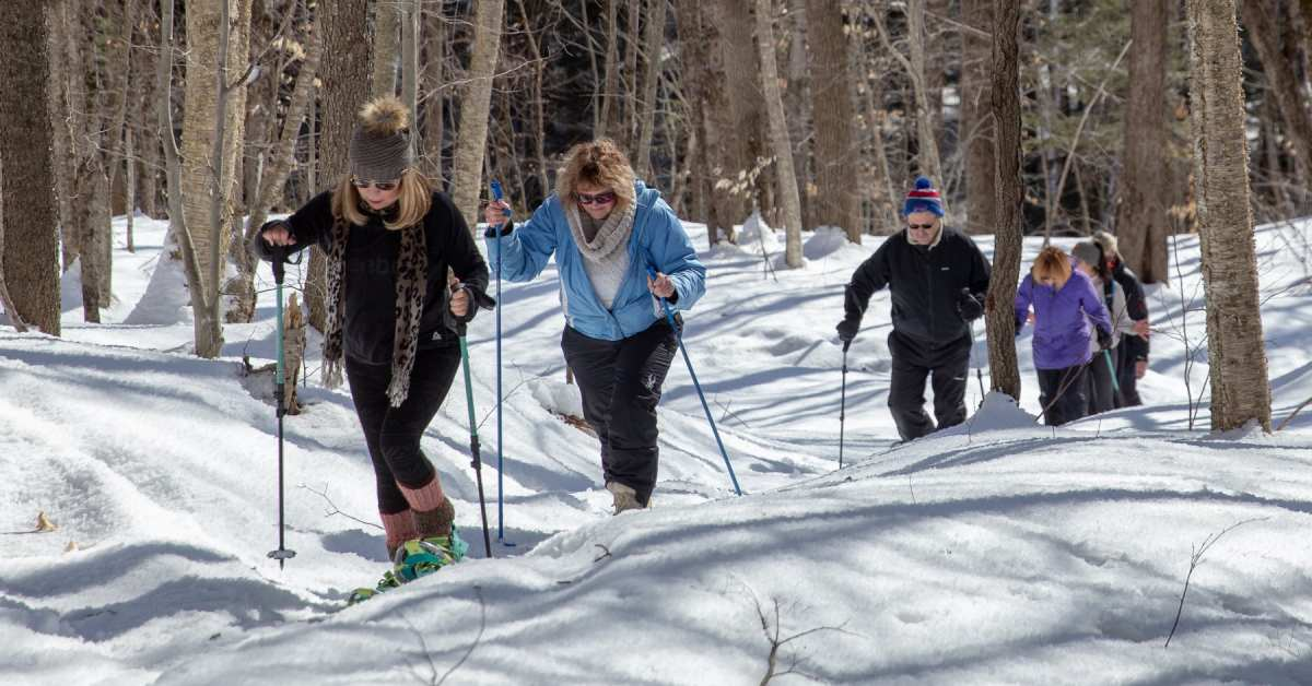 a line of people snowshoeing in the woods