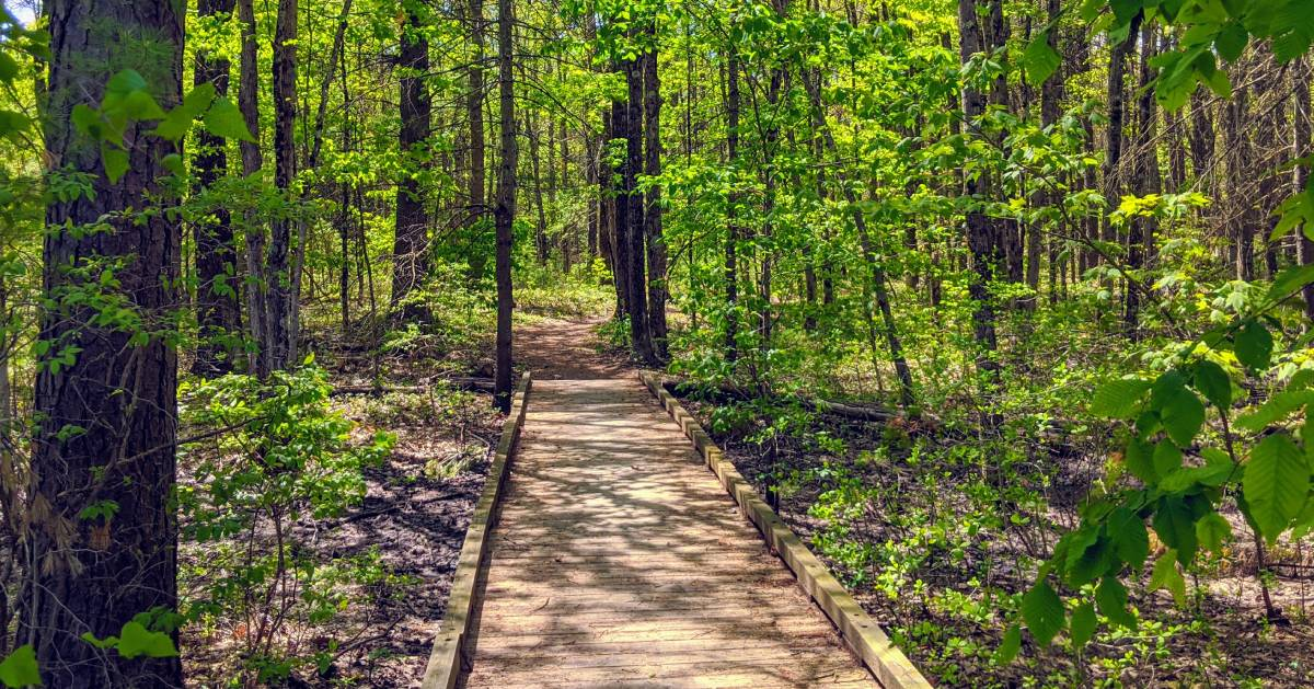 wooded path in woods