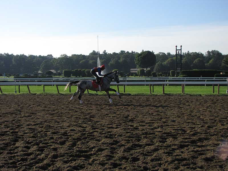 Throughbred horse wroking out with their trainer at Saratoga Racecourse