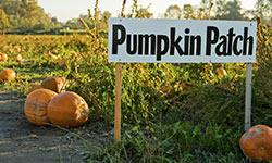 pumpkin patch sign in pumpkin patch