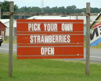 strawberry- open sign.jpg