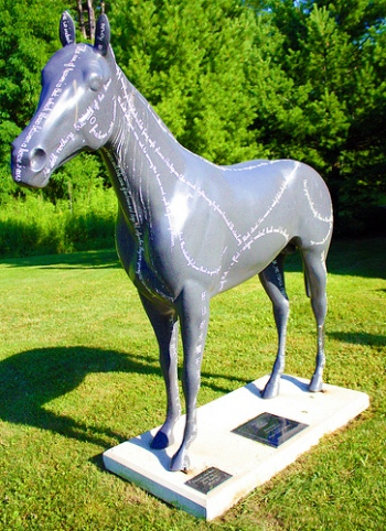 Horse 06-A.jpg