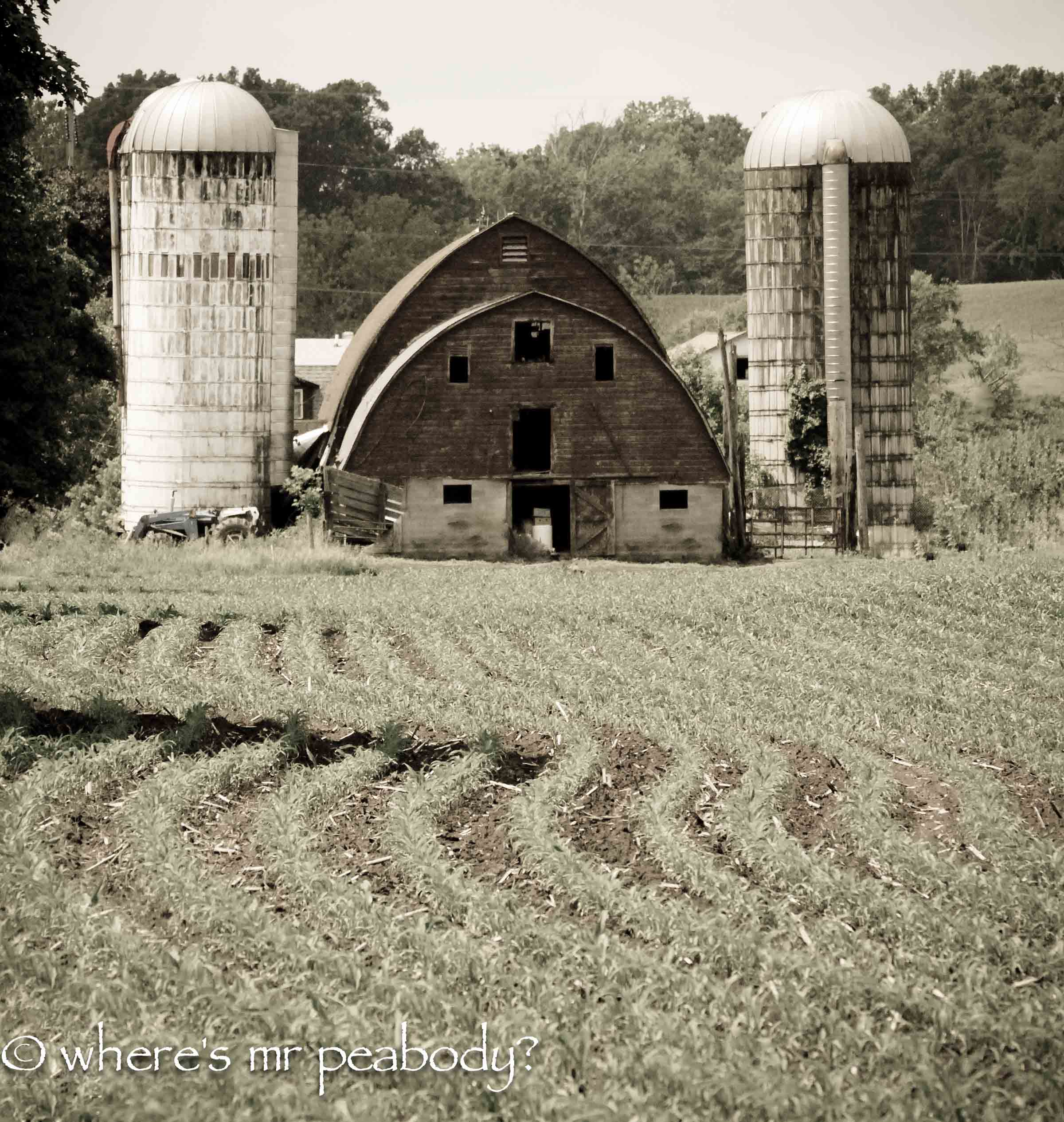 r001 barn corn 1.jpg