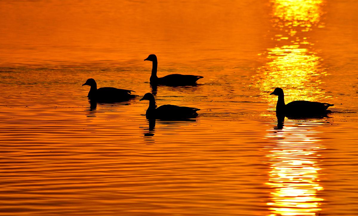sunrise-round-lake1-sm.jpg