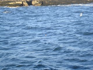 puffin in middle.jpg