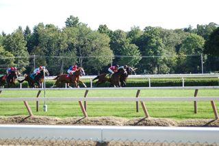 horses on the track.jpg