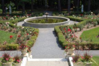 yaddo rose garden.jpg