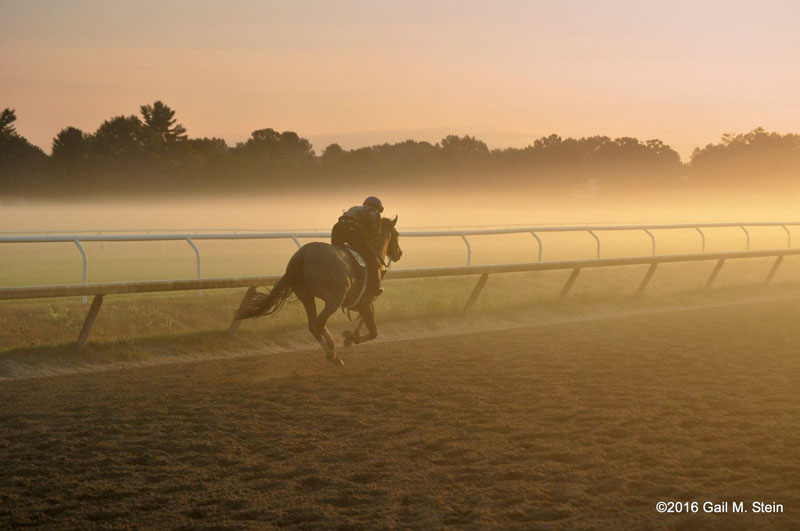 horse warming up in orange glow of early morning mist