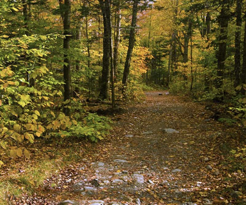 A trail in the woods with fall foliage